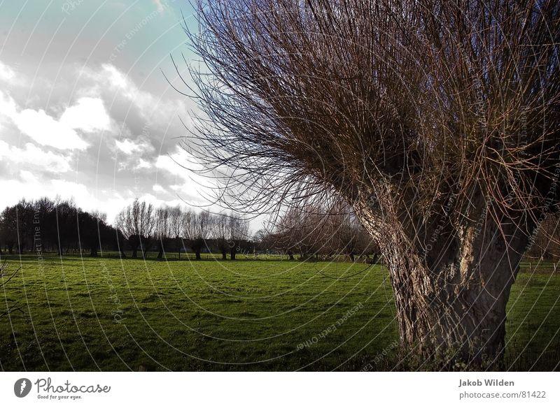 Bruch eigenwillig Baum Wolken Wiese grün Sonne Physik frisch Heimat Außenaufnahme Baumstruktur grell Dorfwiese Baumstamm lichtvoll Gras Grünfläche Winter alt