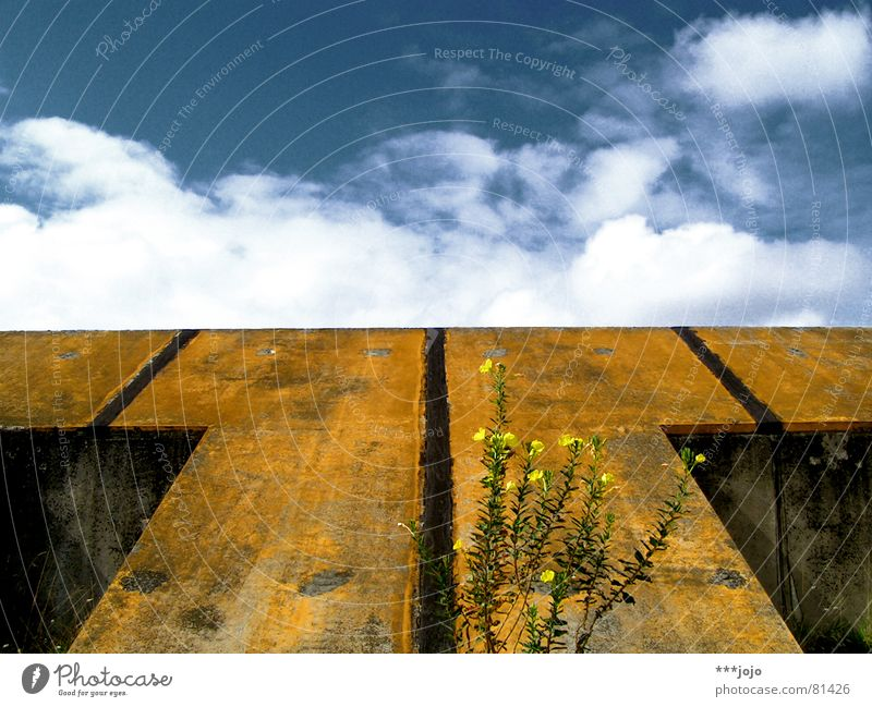 rampe. Himmel Blume blau Pflanze Wolken gelb Beton Frankreich Gegenteil Symmetrie Rampe Nachtkerze