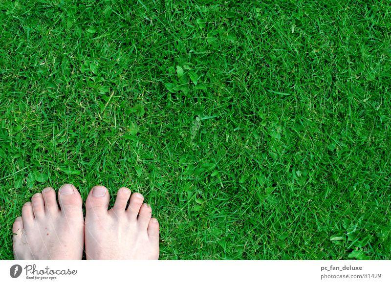 Grüne Füße grün Gras Fuß Rasen Zehen schreiten