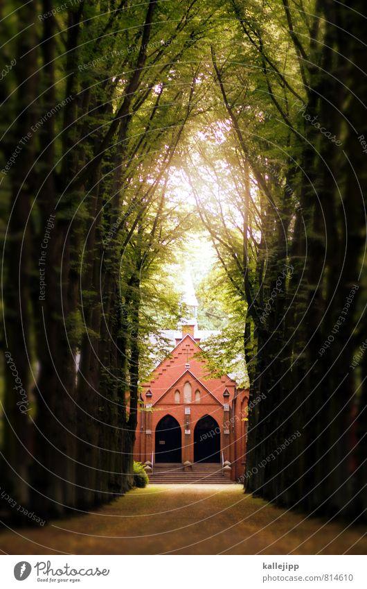 heaven Kirche Frieden Kultur Religion & Glaube Christentum Beerdigung Kapelle Jesus Christus Wege & Pfade Friedhof Trauer Traurigkeit Ehre Allee Baum Spalier