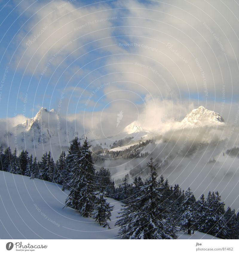 da hatte es noch Schnee Pulverschnee Nadelwald Neuschnee Wald Tanne Wolken Nebel Schneeberg Morgennebel Bergkette Berge u. Gebirge verhängt Alpen spitzig Spitze