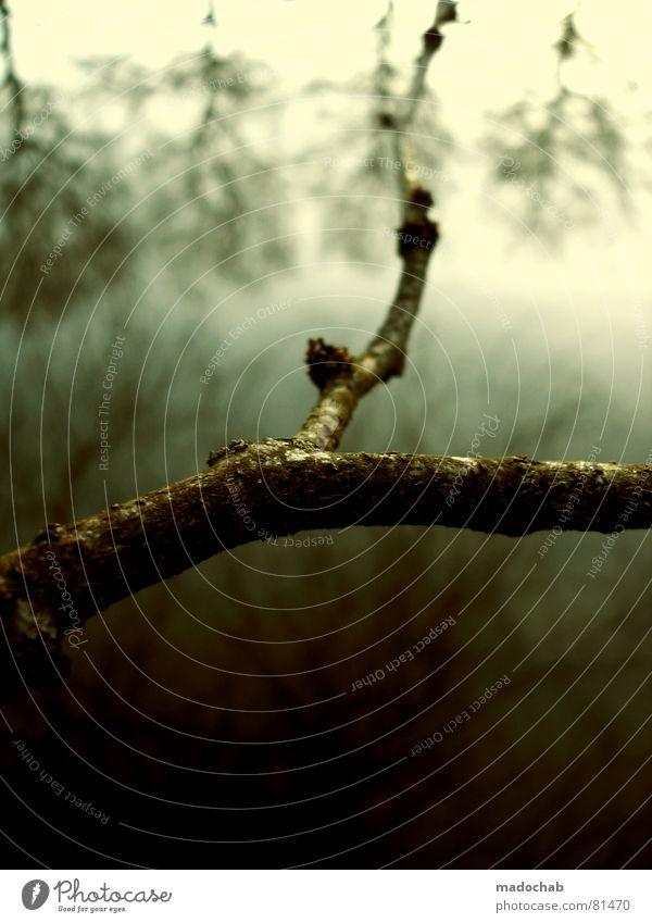 NUR IM LICHT Romantik Wald Baum Winter Herbst kalt grau Kitsch Natur Holzmehl Himmel Blatt grün Wäldchen Nadelwald Herbstbeginn Schnellzug Baumstamm Nebel