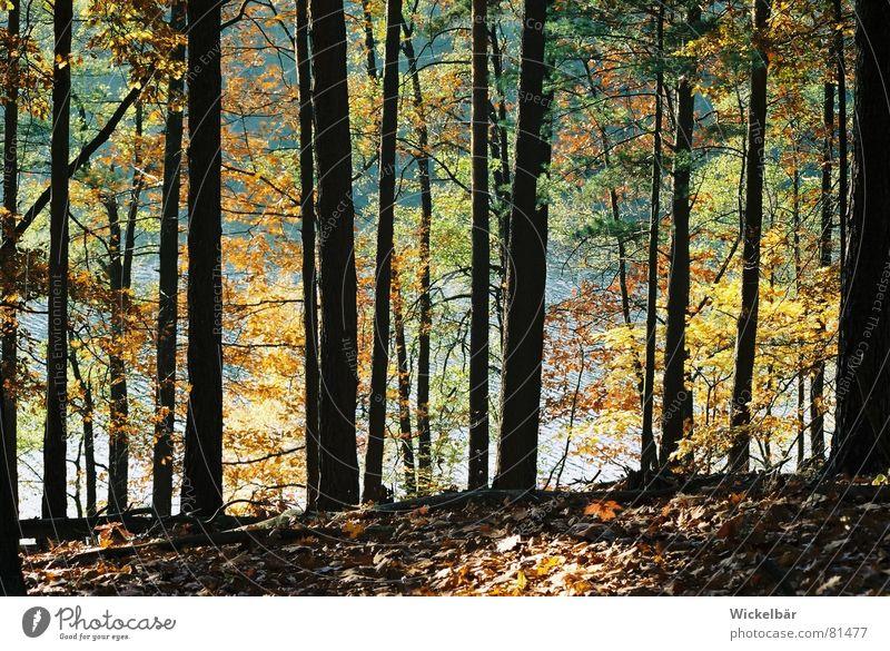 Die Farben des Waldes See Herbst Baum Blatt mehrfarbig Jahreszeiten Freizeit & Hobby Luft Atem atmen frisch ruhig Erholung Ferien & Urlaub & Reisen Brandenburg