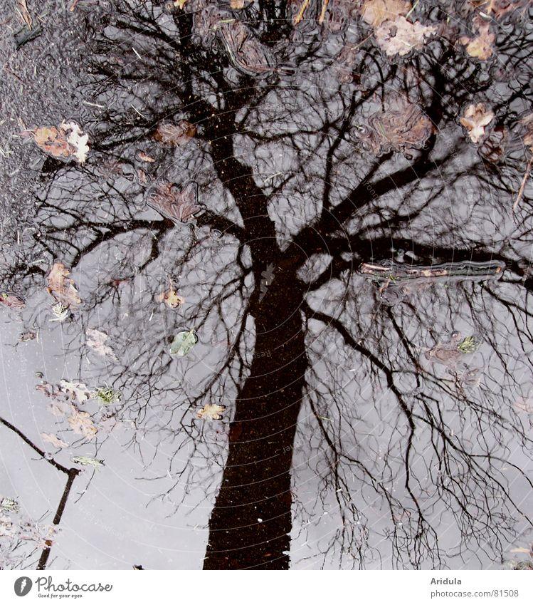 strassenbaum Baum Asphalt Pfütze Reflexion & Spiegelung trüb Blatt grau schwarz unklar Linde Straßenbelag Straßenverkehr schlechtes Wetter Wolken poetisch