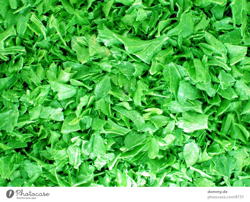 Petersilchen grün Blatt Gesundheit Kräuter & Gewürze Petersilie