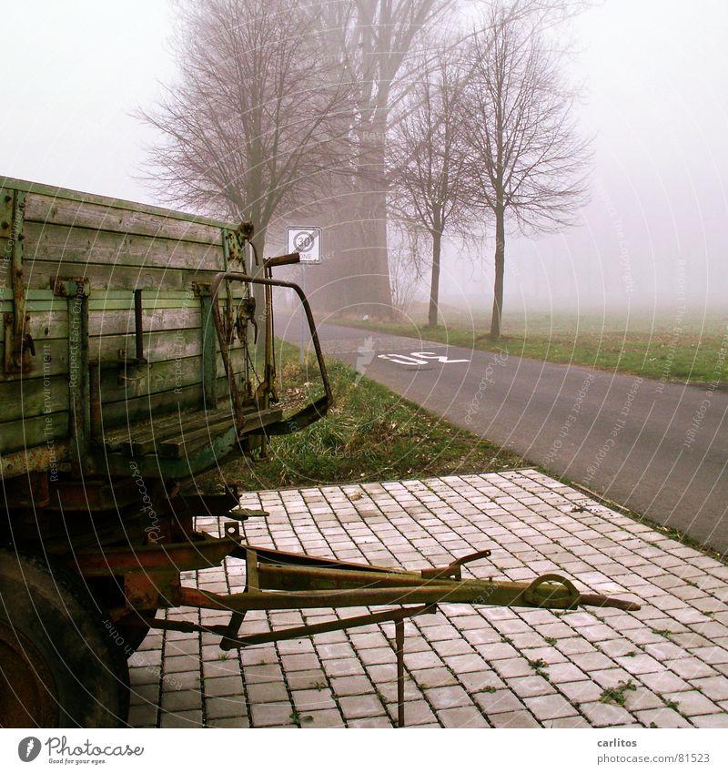 Kein blasser Dunst .. Nebel Pappeln Baum Allee Dorf Landwirtschaft Nest Tempo 30 Nebelschleier Kuhdorf Winter betonpflaster Amerika Straße Wege & Pfade
