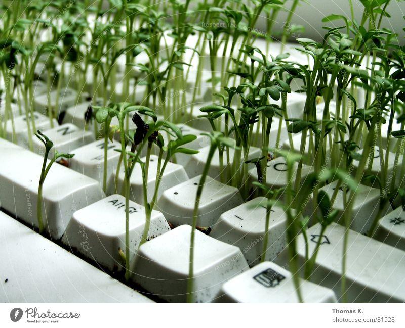 ALTGR (oder™:Kontextmenü) Pflanze Arbeit & Erwerbstätigkeit Business Computer Technik & Technologie Landwirtschaft Informationstechnologie Tastatur ökologisch