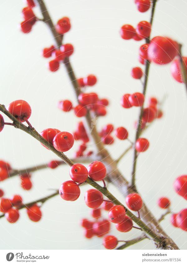 Punkt für Punkt Natur Baum Pflanze rot Winter Farbe Garten Park Zufriedenheit Frucht Kreis rund Ast Punkt Kugel Blumenstrauß