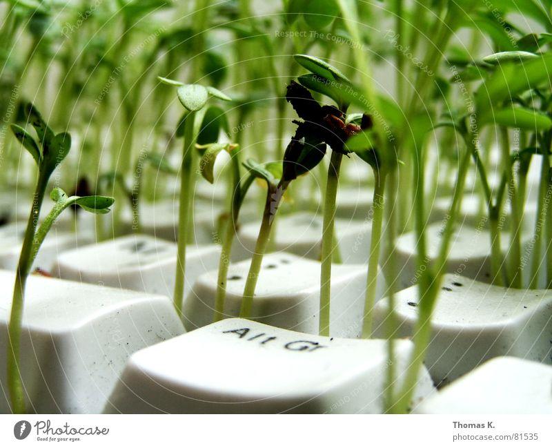 Es grünt so grün (oder™: Kulturfolger) Pflanze Arbeit & Erwerbstätigkeit Business Computer Technik & Technologie Kräuter & Gewürze Landwirtschaft