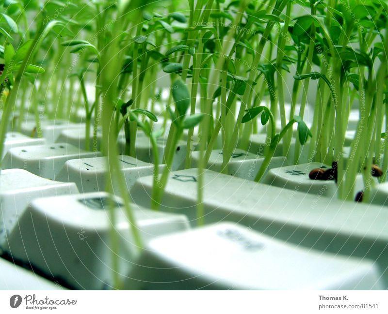 Alternativ (oder™: Kräutergarten) Pflanze Arbeit & Erwerbstätigkeit Business Computer Technik & Technologie Landwirtschaft Informationstechnologie Tastatur