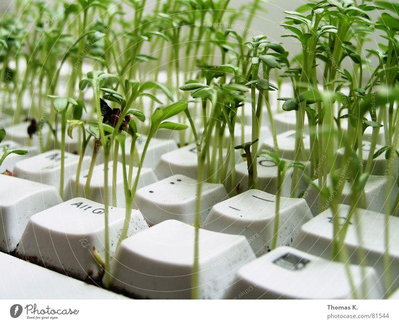 Biomechanic (oder™: Mahlzeit) Pflanze Arbeit & Erwerbstätigkeit Business Computer Landwirtschaft Informationstechnologie Tastatur ökologisch Samen Umweltschutz Hardware Erneuerbare Energie Büroarbeit Elektrisches Gerät Symbiose Kresse