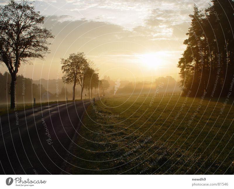 Sonnenaufgang kurz vor Franken Baum grün Wolken Straße Wald Wiese Gras Wege & Pfade Sonnenaufgang Straßenverkehr Rasen Asphalt Verkehrswege Weide Straßenbelag Pfosten
