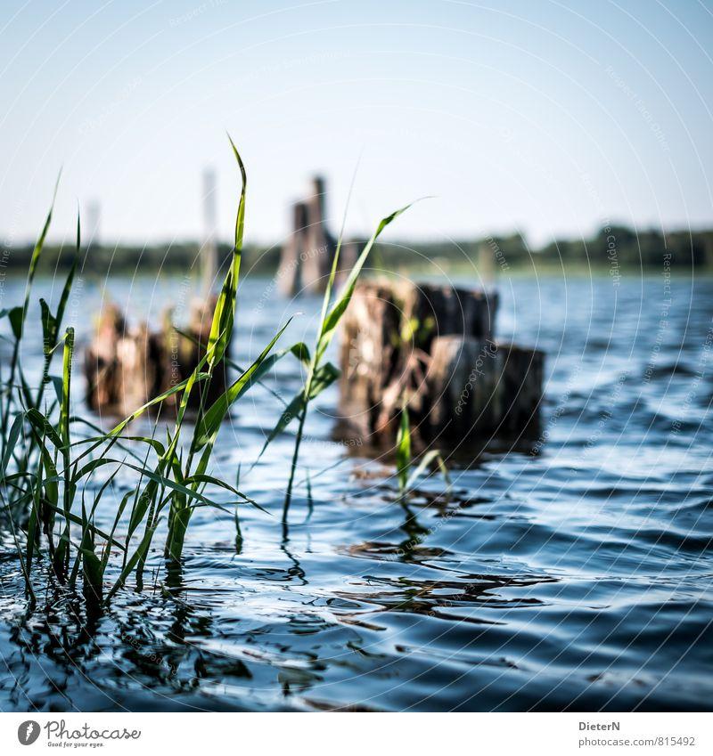 Grün blau grün Wasser Umwelt braun Flussufer Schilfrohr Buhne Uferbefestigung