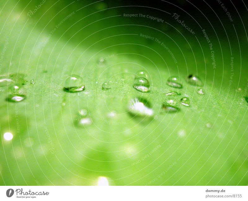 Perlblatt 2 Natur schön grün Wasser Blatt nah