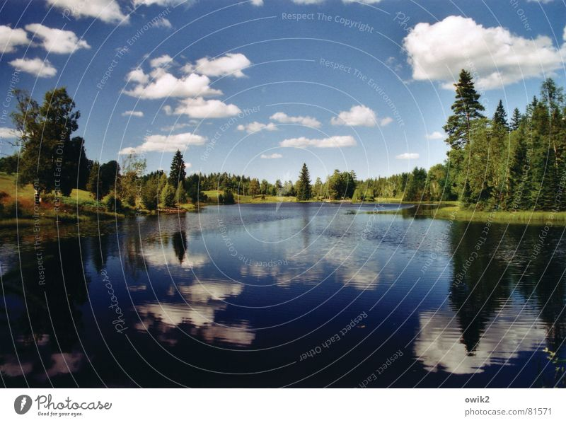 Wald | Wasser | Wolken Himmel Natur Ferien & Urlaub & Reisen Pflanze Baum Erholung Einsamkeit Landschaft Ferne Umwelt Freiheit See Horizont