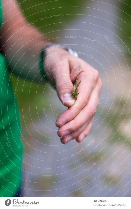 vielen dank. Mensch Natur Jugendliche Mann Pflanze schön grün Sommer Hand Freude 18-30 Jahre Junger Mann Umwelt Erwachsene Gras Wege & Pfade