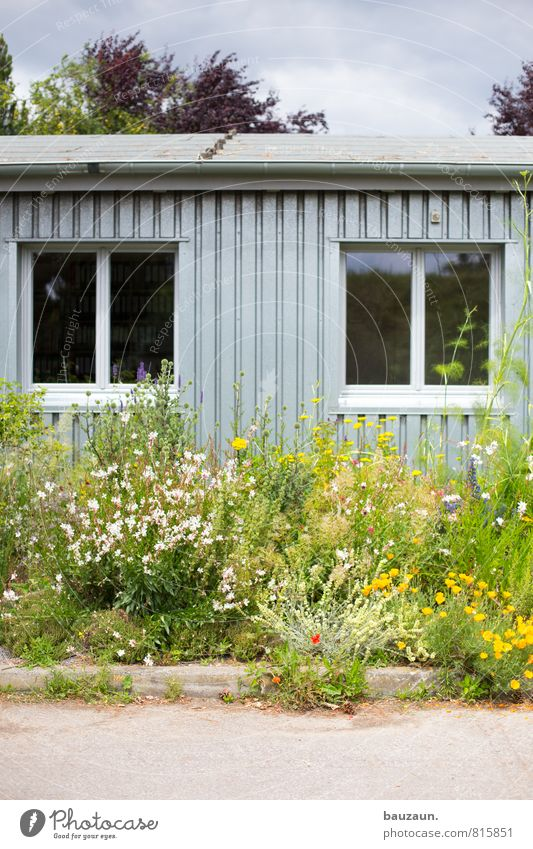 flower power. Natur Pflanze grün Blume Umwelt Fenster Wand Straße Wiese Wege & Pfade Blüte Mauer Holz Linie Garten Park