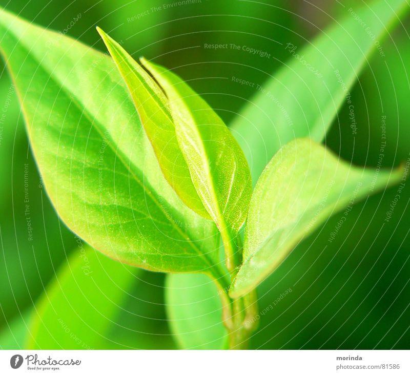 Nach-Wuchs grün Pflanze Sommer ruhig Blatt Frühling Stimmung Botanik Trieb Jungpflanze Pflanzenteile