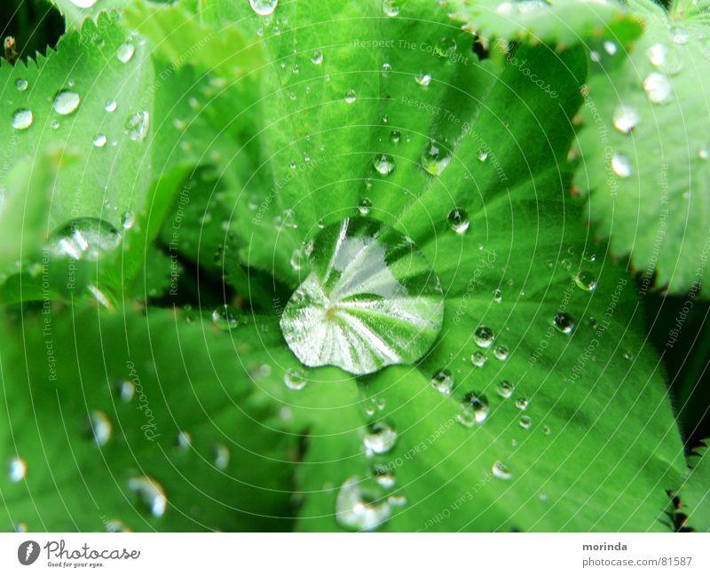 Tautropfen Natur Wasser grün Pflanze Sommer Blatt Frühling Park Regen Wassertropfen nass frisch rund Klarheit