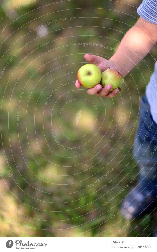 Ernte Mensch Kind Sommer Hand Gesunde Ernährung Herbst klein Garten Lebensmittel Frucht Kindheit süß lecker Apfel