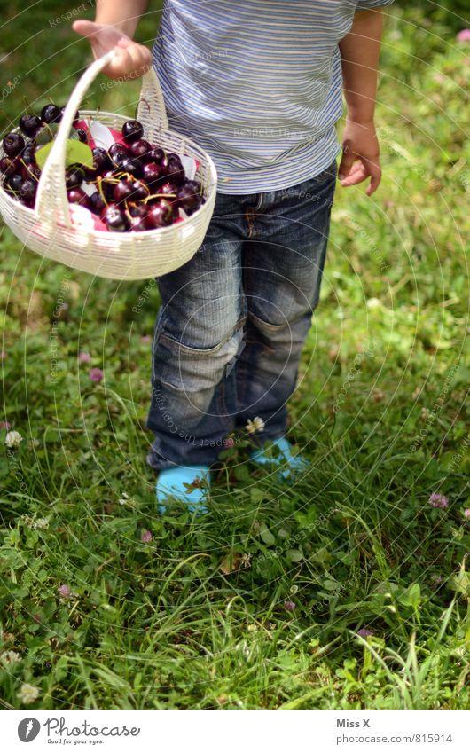 Körbchen Mensch Kind Sommer Gesunde Ernährung Wiese Garten Lebensmittel Frucht Kindheit niedlich süß lecker Ernte Bioprodukte Kleinkind