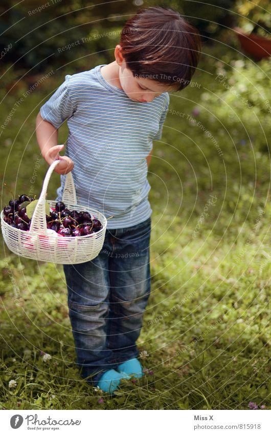Kirschmaus Lebensmittel Frucht Ernährung Picknick Bioprodukte Spielen Garten Mensch Kind Kleinkind Kindheit 1 1-3 Jahre 3-8 Jahre Sommer brünett frisch