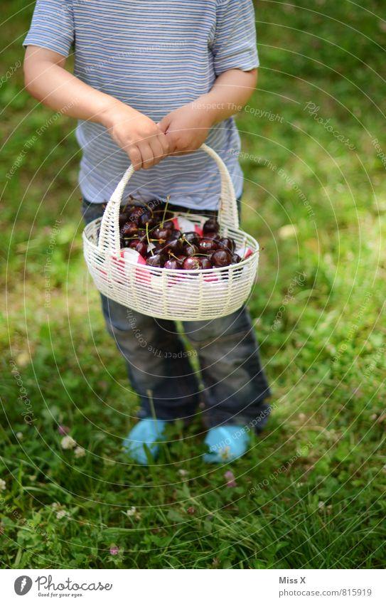 Körbchen Mensch Kind Sommer rot Gesunde Ernährung Gefühle Wiese feminin Gesundheit Garten Stimmung Lebensmittel Freizeit & Hobby maskulin Frucht frisch