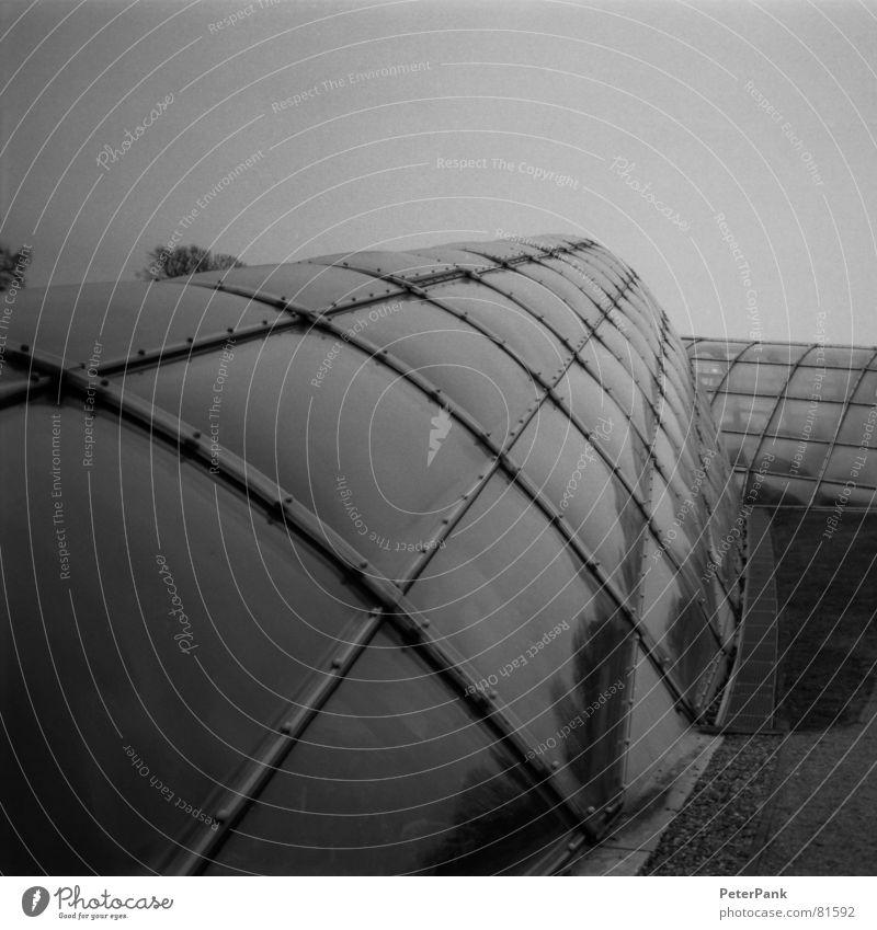 graz 3/03 (1) Haus schwarz weiß Gebäude März Österreich Botanik Gewächshaus steil Quadrat Spiegel Reflexion & Spiegelung grau streben Fenster modern Glas glass