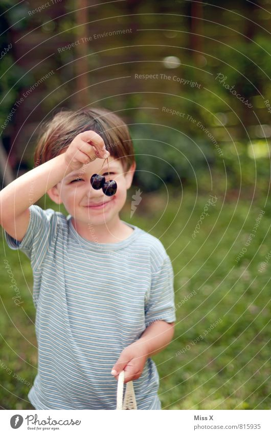 Kirschmaus Frucht Essen Bioprodukte Gesunde Ernährung Garten Mensch Kind Kleinkind Junge Kindheit 1 1-3 Jahre 3-8 Jahre Sommer genießen Lächeln lecker niedlich