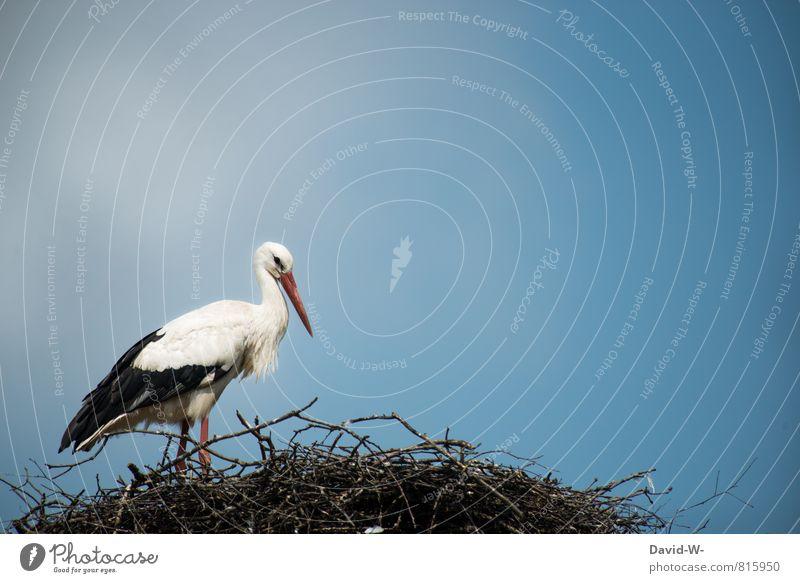 Der Babybringer Natur Luft Himmel Sommer Sträucher Ast Wiese Feld Tier Wildtier Storch Vogel Schnabel Nest Nestbau 1 Arbeit & Erwerbstätigkeit Brunft stehen