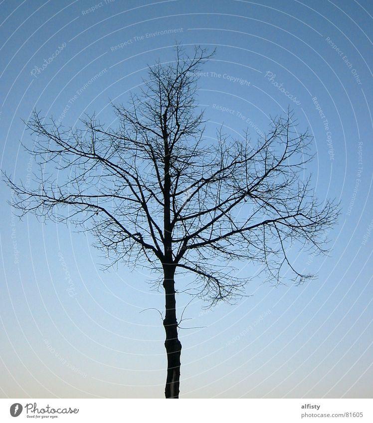 Blätterlos Geäst Baum Blatt Herbst Baumstamm Baumstruktur Winter Himmel blau Ast