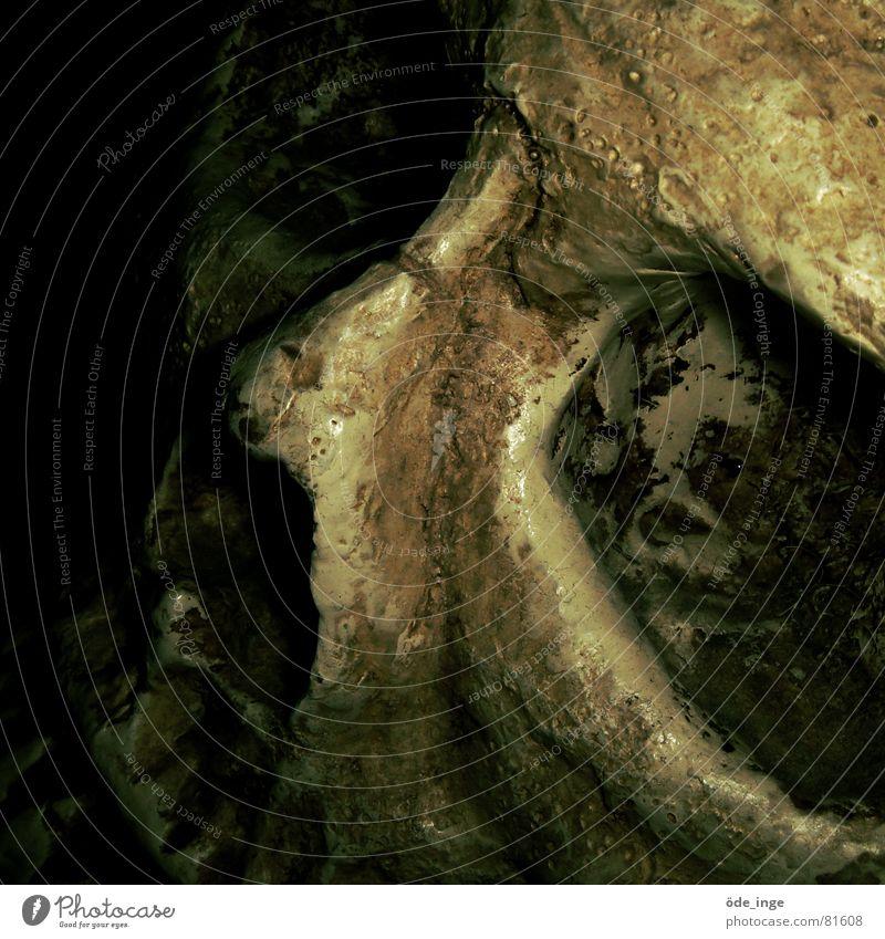 schädlich Tod Leben Beine Vergänglichkeit verfaulen Ende dünn Verfall Verschiedenheit Leiche Skelett Schädel Paddel Abteilung