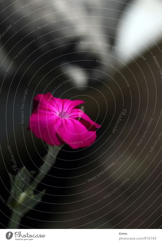 Der Duft des Sommers Kunst Kunstwerk Skulptur Keramik Blume Blüte natürlich rosa Gefühle Lebensfreude Frühlingsgefühle Sympathie Freundschaft Liebe Verliebtheit