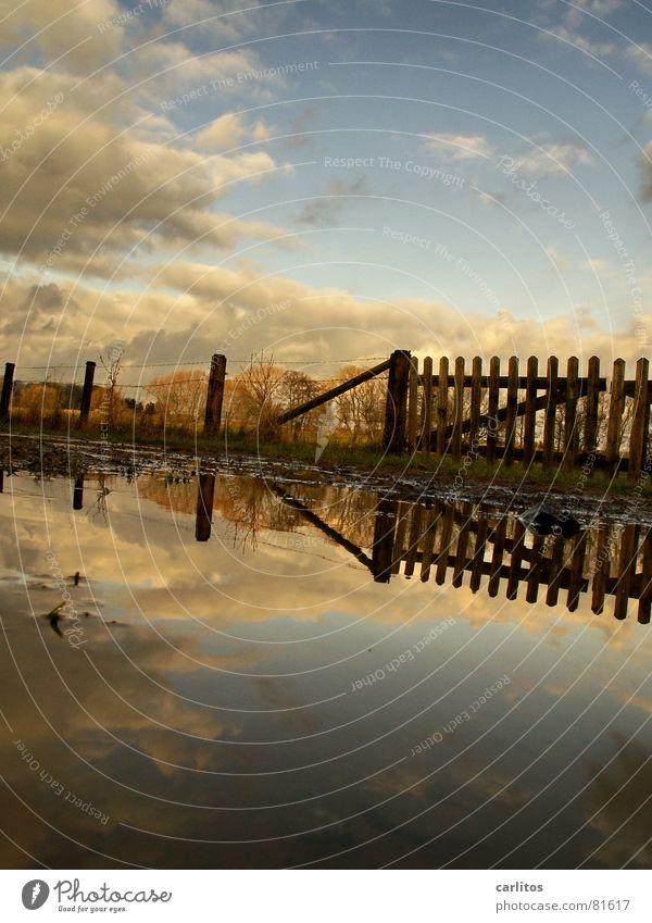 man, die cow ist .. Wasser schön Baum Sonne ruhig Wolken Erholung Herbst Wiese Glück Wege & Pfade Zufriedenheit 2 Wind Horizont Mitte