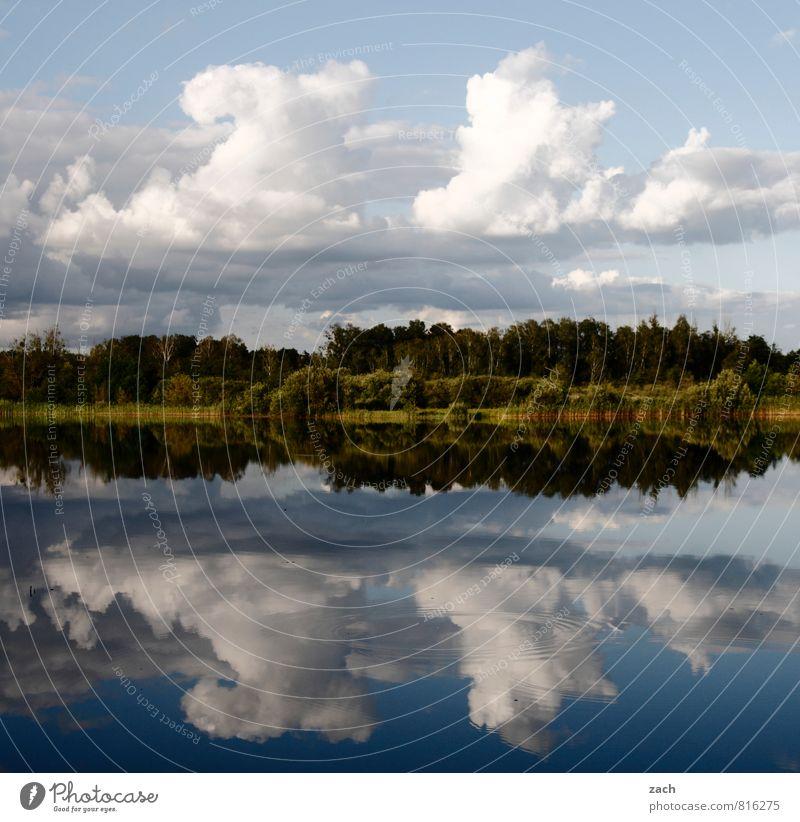 SeelenRuhe Himmel Natur Ferien & Urlaub & Reisen blau Wasser Sommer Baum Erholung ruhig Landschaft Wolken Wald Küste Frühling Idylle Wellen