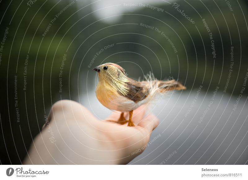 Lieber den Spatz in der Hand Freiheit Umwelt Natur Tier Wasser Sommer Teich See Vogel Tiergesicht Flügel 1 fliegen Sicherheit Schutz Geborgenheit falsch