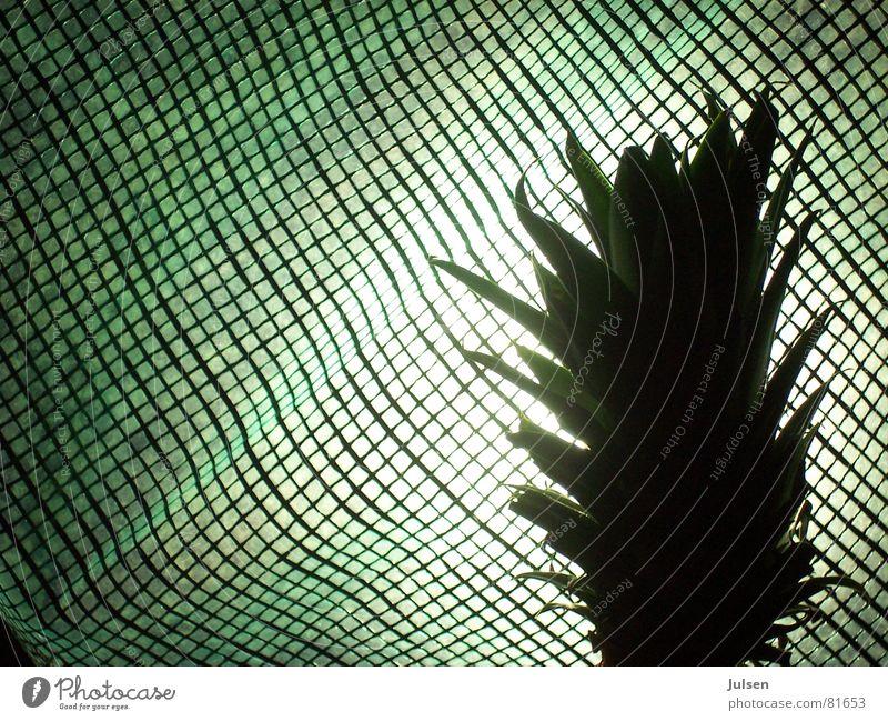 Andasnas grün Farbe Frucht Netz Raster kariert Abdeckung Haarschopf Ananas