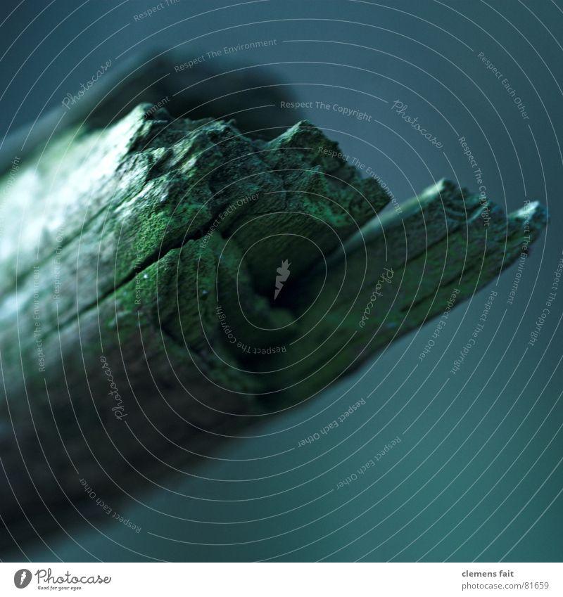 stumpf alt grün blau dunkel Holz einfach Vergänglichkeit tief mystisch Splitter