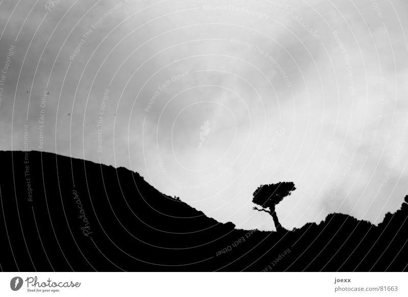 Dagegen Baum Wolken Hügel schlechtes Wetter Wellen Orkan Baumstamm Windseite Sturm bezogen trüb Schwarzweißfoto Himmel Berge u. Gebirge bedecken Niveau Kamm bö