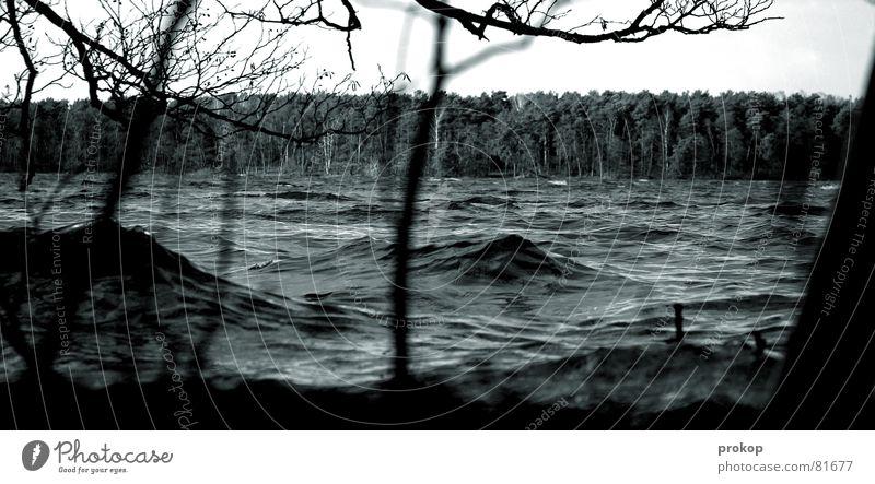 Pfützenbild gescheitert Monsun fluten Desaster See Sturm Orkan Wald Baum Wellen Gischt Schaum Segeln bedrohlich Unwetter Naturkatastrophe schlechtes Wetter