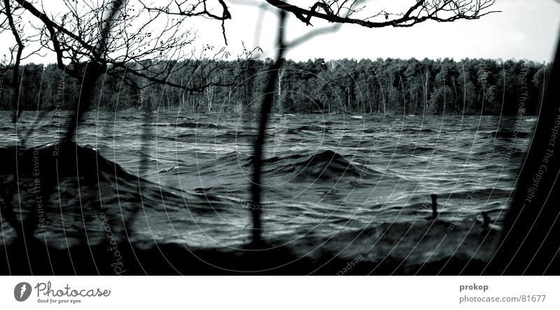 Pfützenbild gescheitert Wasser Baum Wald Wege & Pfade See Regen Wellen Angst Wetter Elektrizität gefährlich Fluss Niveau bedrohlich Klima Ast