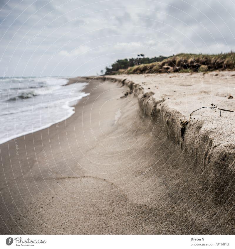 Strand Meer Wellen Sand Wasser Wolken Horizont Baum Küste Ostsee braun grau weiß Darß Weststrand Farbfoto Menschenleer Textfreiraum oben Textfreiraum unten Tag