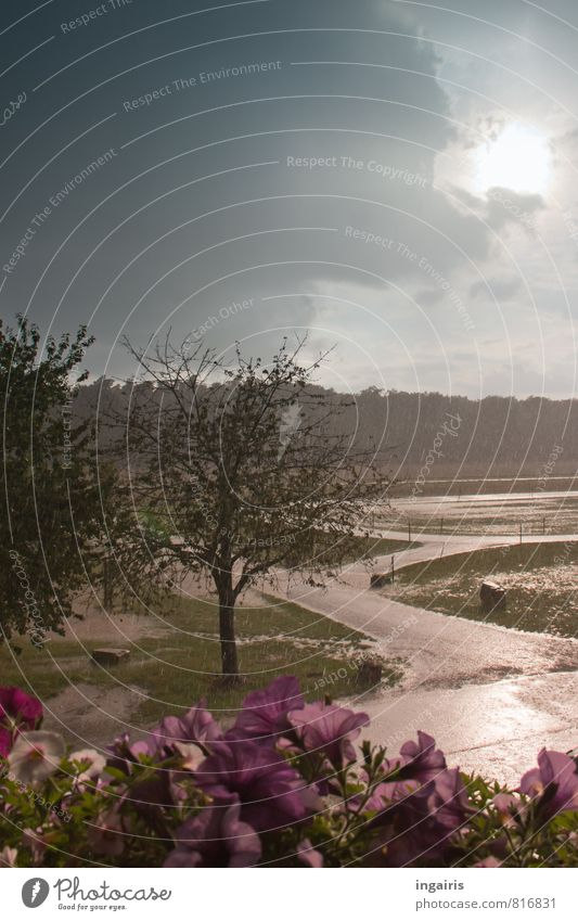 Wolkenbruch Himmel Natur blau grün Wasser Sommer Sonne Baum Blume Landschaft Tier Wiese grau Stimmung Horizont rosa
