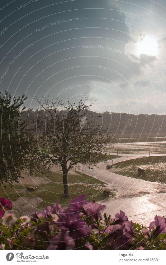 Wolkenbruch Natur Landschaft Tier Wasser Wassertropfen Himmel Gewitterwolken Sonne Sonnenlicht Sommer Klima Wetter schlechtes Wetter Regen Baum Blume Park Wiese