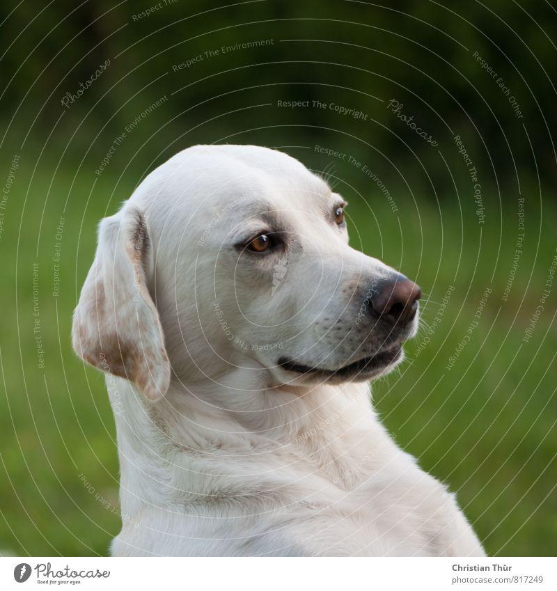 Unser Max muss natürlich auch beim 100er dabei sein Hund schön grün weiß Sonne Freude Tier schwarz Gras Glück Gesundheit Garten blond sitzen ästhetisch Schönes Wetter
