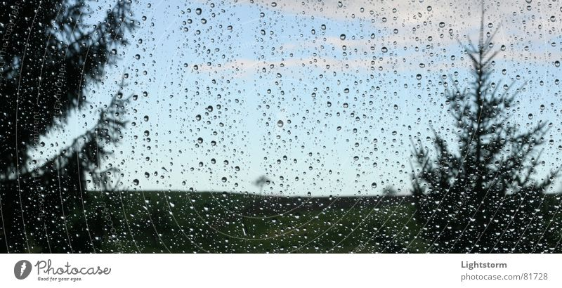 Melancholie Himmel Baum Wiese Fenster Gras Traurigkeit Regen Glas Wassertropfen Trauer Tanne Verzweiflung Tiefenschärfe Sorge hängen lassen Gewitterregen