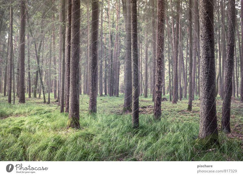 Baumland Natur Landschaft Wald natürlich schön grün Umweltschutz Farbfoto Außenaufnahme Tag Starke Tiefenschärfe