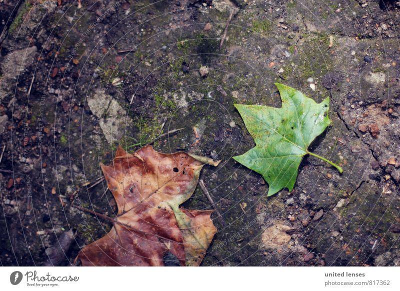#LO Plattes Blatt grün Herbst Kunst braun Zufriedenheit ästhetisch Boden Herbstlaub herbstlich Ahorn Herbstfärbung Herbstbeginn Kastanienbaum verrotten