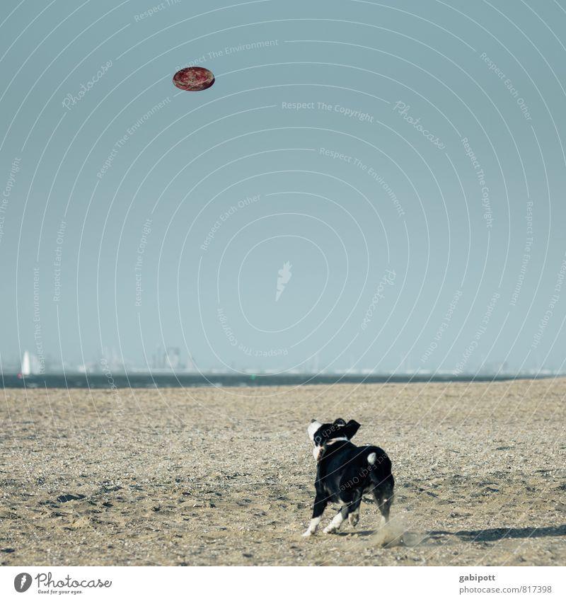spannung Landschaft Sand Wolkenloser Himmel Horizont Schönes Wetter Küste Strand Nordsee Ostsee Meer Tier Haustier Hund 1 fangen sportlich frei Fröhlichkeit