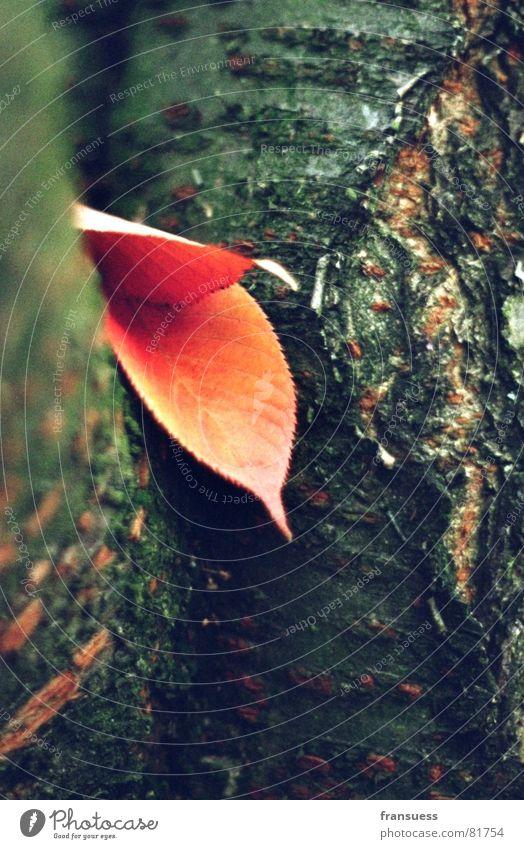 einfach mal ausruhen Herbst Baum Blatt ruhig Gelassenheit Botanik Pflanze Erholung dünn Baumrinde Baumstamm Baumstruktur müßiggang Natur